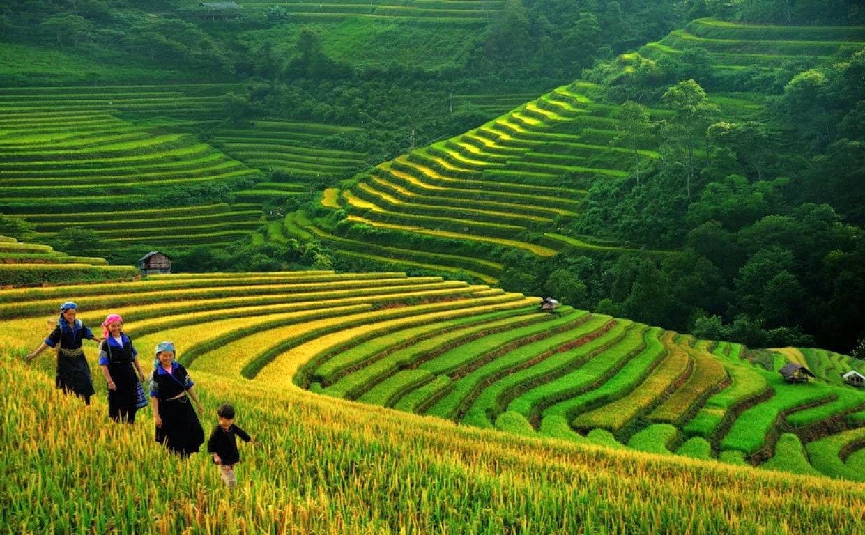 Где посмотреть панду во вьетнаме