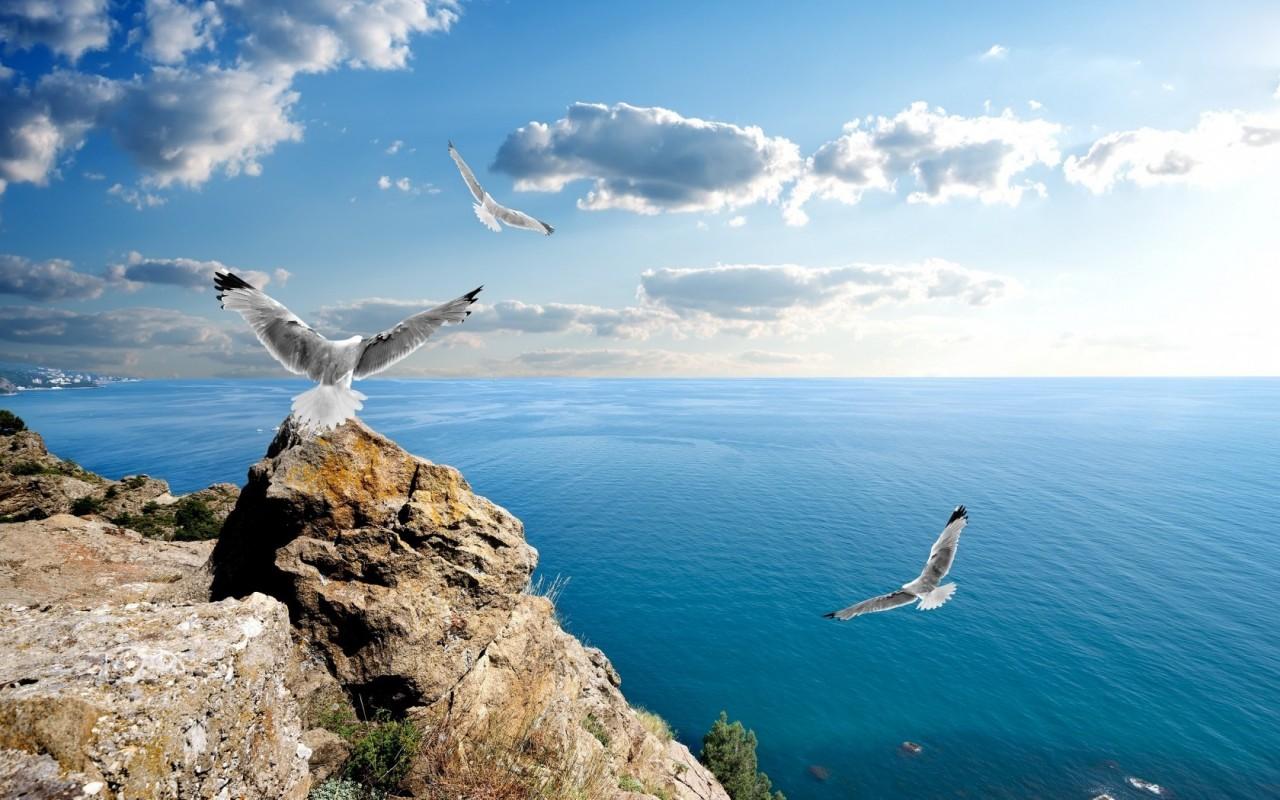 Туры на Черное море из МосквыТуры на Черное море из Москвы